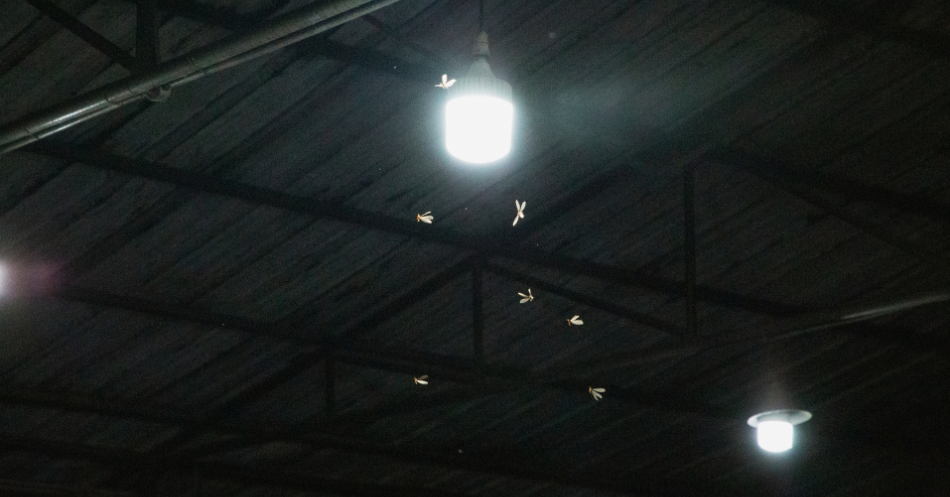 bright light impact of light pollution on insects